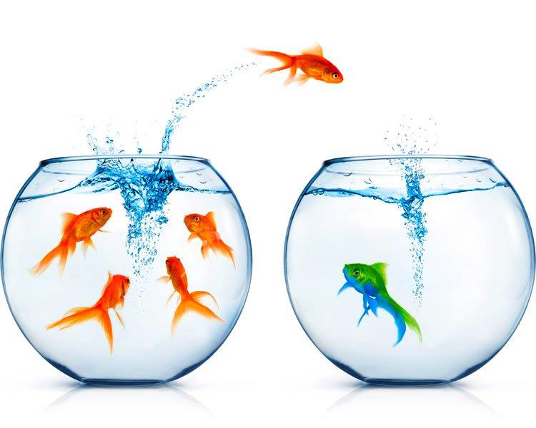 ewf-neuefische-wechseln.jpg